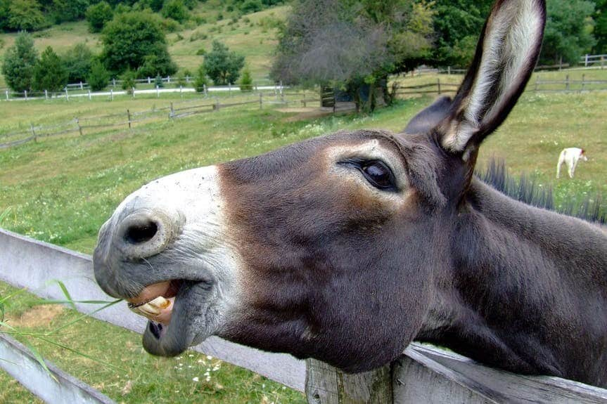 The donkey sweats