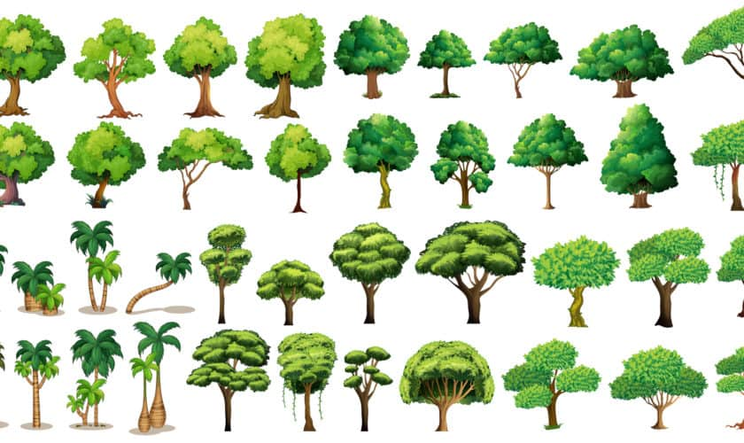 HELP trees