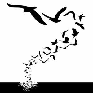World Migration Bird day
